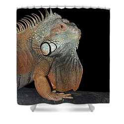 Green Iguana  Shower Curtain by Judy Whitton