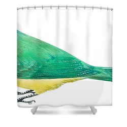 Green Jay Shower Curtain by Anonymous