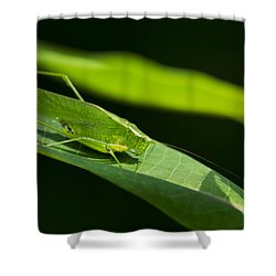 Green Katydid Shower Curtain by Christina Rollo