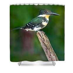 Green Kingfisher Chloroceryle Shower Curtain