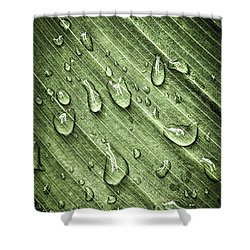 Green Leaf Background With Raindrops Shower Curtain by Elena Elisseeva