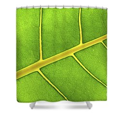 Green Leaf Close Up Shower Curtain by Elena Elisseeva