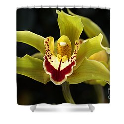 Green Orchid Flower Shower Curtain by Joy Watson