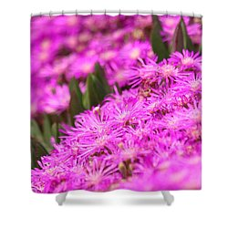 Green Picket Fences  Shower Curtain