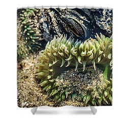 Green Sea Anemone Shower Curtain