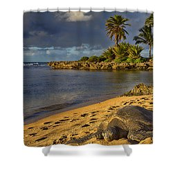 Green Sea Turtle At Sunset Shower Curtain