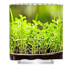 Green Spring Seedlings Shower Curtain by Elena Elisseeva