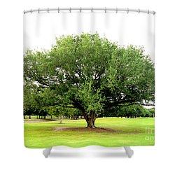 Green Tree Shower Curtain by Oksana Semenchenko