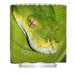 Shower Curtain featuring the photograph Green Tree Python #2 by Judy Whitton