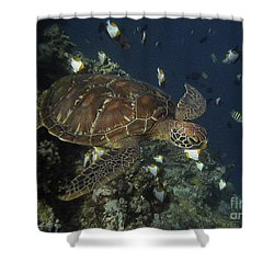 Hawksbill Turtle Shower Curtain by Sergey Lukashin