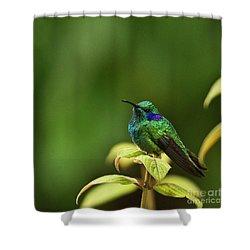 Green Violetear Hummingbird Shower Curtain by Heiko Koehrer-Wagner