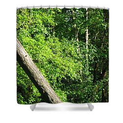 Greenbelt Fall Shower Curtain