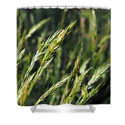 Greener Grass Shower Curtain by Justin Woodhouse