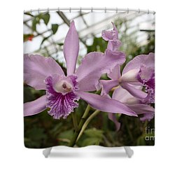 Greenhouse Ruffly Orchids Shower Curtain by Carol Groenen