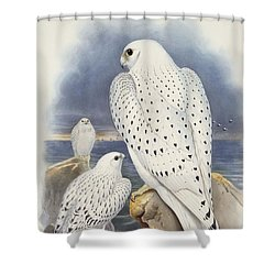 Greenland Falcon Shower Curtain by John Gould