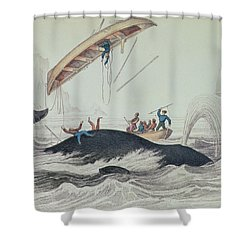 Greenland Whale Book Illustration Engraved By William Home Lizars  Shower Curtain by James Stewart