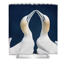 Greeting Gannets Canada Shower Curtain
