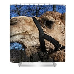 Greetings Shower Curtain by Vadim Levin