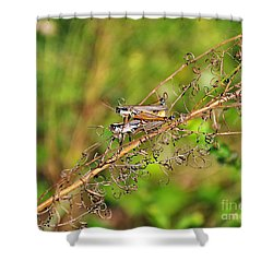 Gregarious Grasshoppers Shower Curtain by Al Powell Photography USA