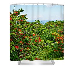 Gregory Bald Shower Curtain by Melinda Fawver