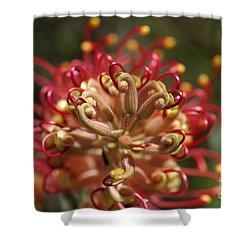 Grevillea Superb Australian Flora Shower Curtain by Joy Watson