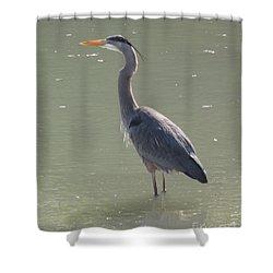 Grey Bird Shower Curtain by Oksana Semenchenko