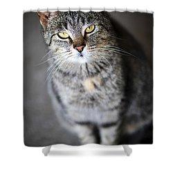 Grey Cat Portrait Shower Curtain by Elena Elisseeva
