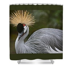 Grey Crowned Crane Shower Curtain by Venetia Featherstone-Witty