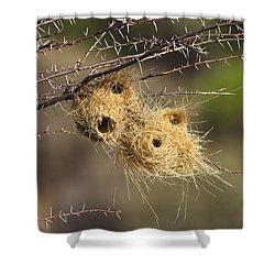 Grey-headed Social-weaver Nests Tanzania Shower Curtain by Konrad Wothe