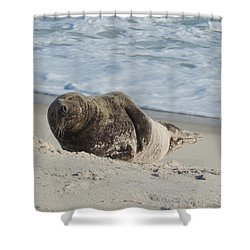 Grey Seal Pup On Beach Shower Curtain by Kimberly Perry