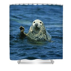 Grey Seal Waving Shower Curtain by Martin Woike