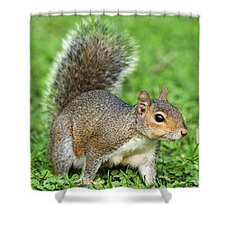 Shower Curtain featuring the photograph Grey Squirrel by Antonio Scarpi