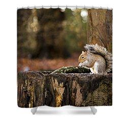 Grey Squirrel On A Stump Shower Curtain
