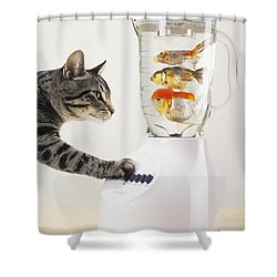 Grey Tabby Cat With Paw On Blender Shower Curtain by Thomas Kitchin & Victoria Hurst