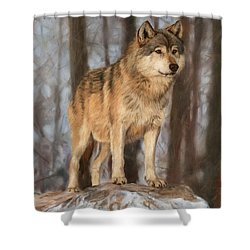 Grey Wolf Shower Curtain by David Stribbling