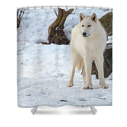 Grey Wolf Shower Curtain by Everet Regal