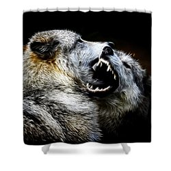 Grey Wolf Fight Shower Curtain