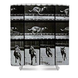 Greyhound Running Shower Curtain by Eadweard Muybridge