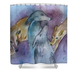 Greyhounds Having A Meeting Shower Curtain