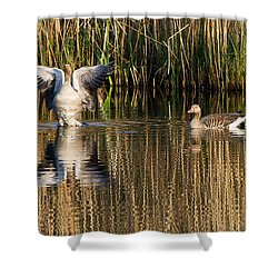 Greylag Goose Family Shower Curtain