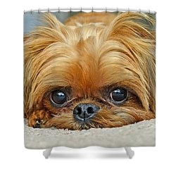 Shower Curtain featuring the photograph Griff by Lisa Phillips