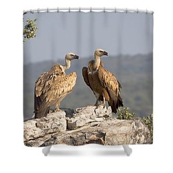 Griffon Vulture Pair Extremadura Spain Shower Curtain by Gerard de Hoog