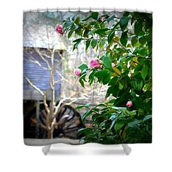 Shower Curtain featuring the photograph Grist Mill Roses by Tara Potts