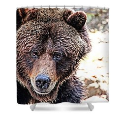Grizz Shower Curtain by Karol Livote