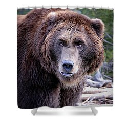 Shower Curtain featuring the photograph Grizzly by Athena Mckinzie