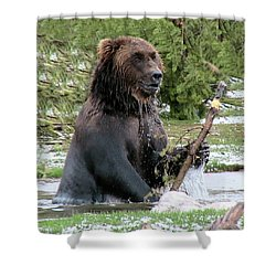 Grizzly Bear 6 Shower Curtain by Thomas Woolworth
