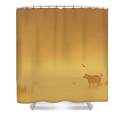 Grizzly Bear In Morning Fog Shower Curtain by Matthias Breiter