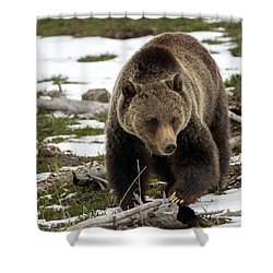 Shower Curtain featuring the photograph Grizzly Bear In Spring by Jack Bell