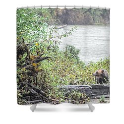 Grizzly Bear Late September 2 Shower Curtain