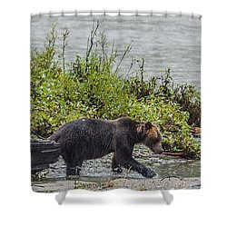 Grizzly Bear Late September 4 Shower Curtain